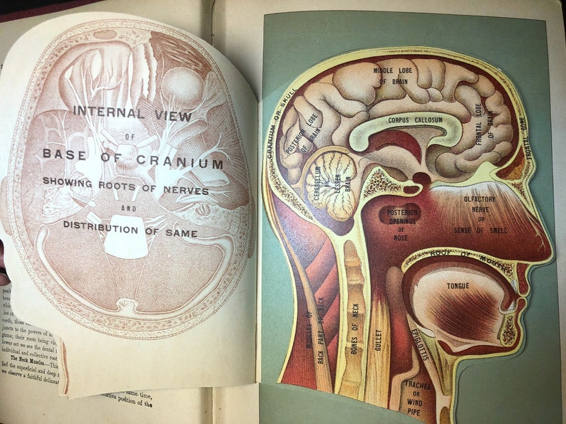 Vintage medical anatomy book  Medicology illustrated giant volume of 10  books in one  Gorgeous illustrations with flip sections