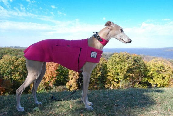 5f140a69256d3 WHIPPET Tummy Warmer, Fleece Dog Coat, Fleece Dog Sweater, Sweater for  Dogs, Whippet Coat, Dog Clothing, Dog Clothes, Dog Accessories, Shirt