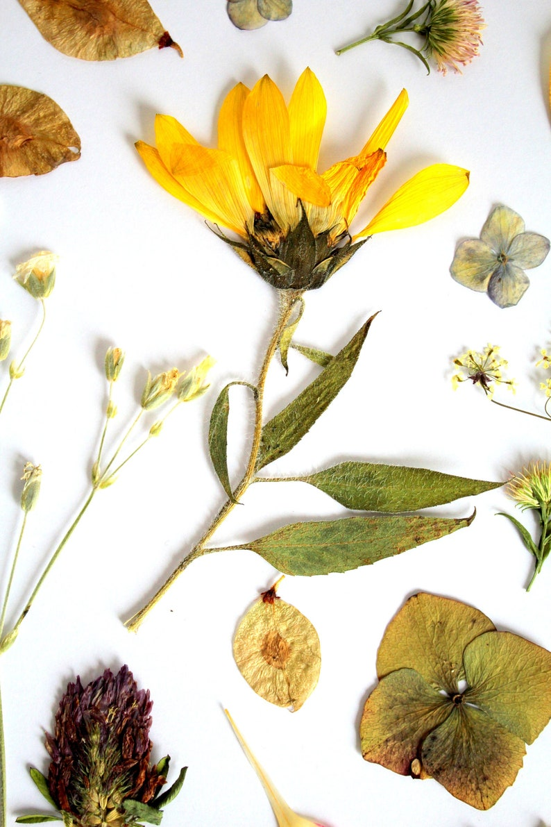 50 Pressed natural flowers and leaves 4 image 0