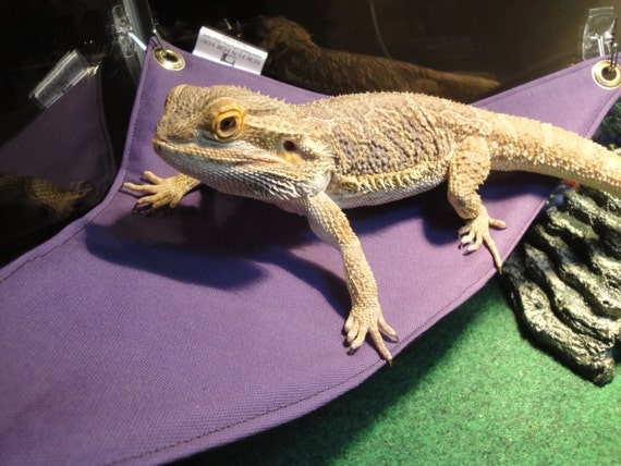 hammock in Bright RED Large Blanket /& Pillow Set for Bearded Dragon bed