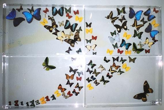 Mariposas!  Four Panel