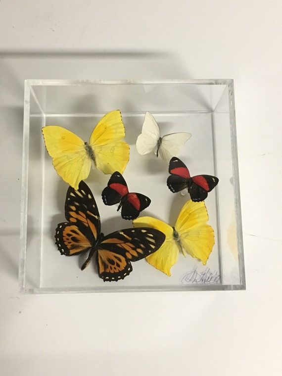 Fly Away - One of a kind real butterfly panel