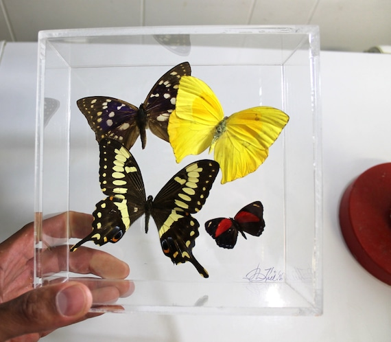 Papillones