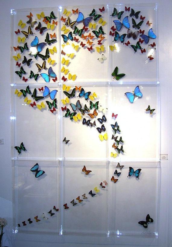 Nine Panel Mural custom made with real butterflies from around the world very colorful - Mariposa Gallery Marshall Hill