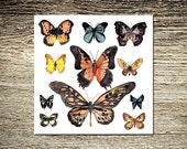 Butterfly Kisses III Print