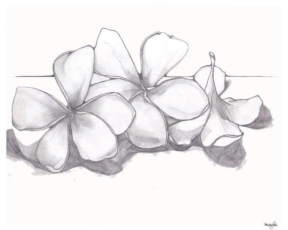 Einzelzimmer Plumeria Bleistiftzeichnung Hampel Blume Zarte Natur Gedruckt