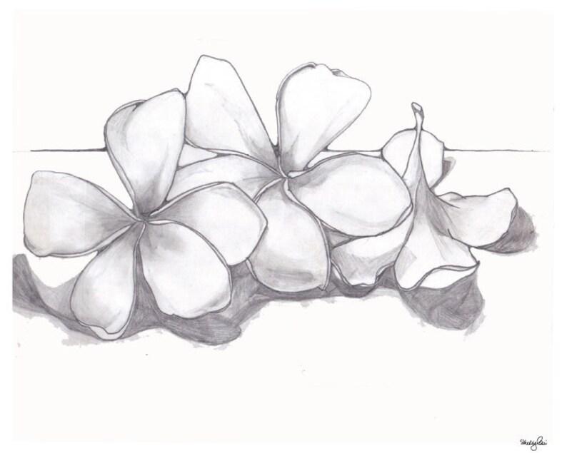 e58862dc70eaf Single Plumeria Pencil Drawing Fine Art Flower Delicate in | Etsy