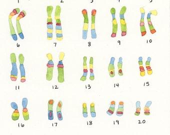 Human Chromosomes, 5X7 Painting