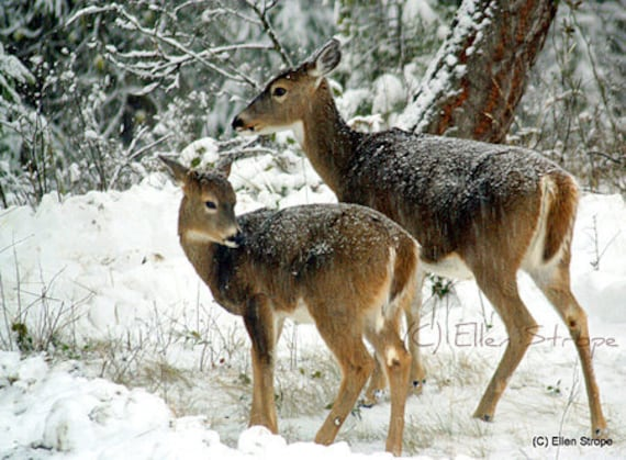 Note Card Snow Deer Trees Doe Fawn Ellen Strope Etsy