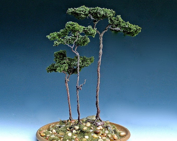 Stand of Three Monterey Pines in Stoneware Container