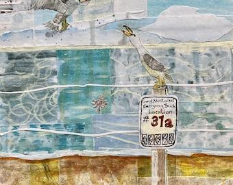 Watercolor painting Herring Gulls