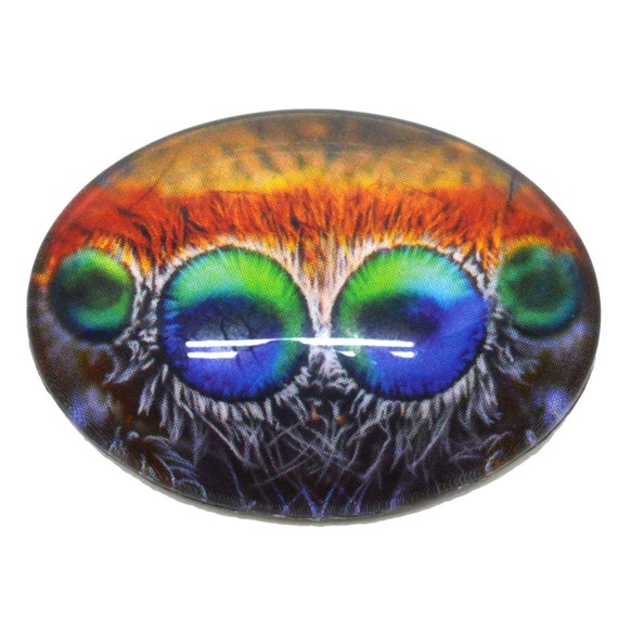 18x25mm Single Colorful Jumping Spider Oval Glass Eyes bug Insect Cabochon