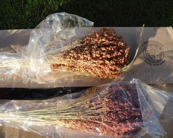 Broom corn | Etsy