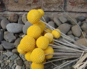 Yellow Billy Balls   Dried Billy Balls   Craspedia   Billy  Balls Dried Flowers  Floral  Supplies