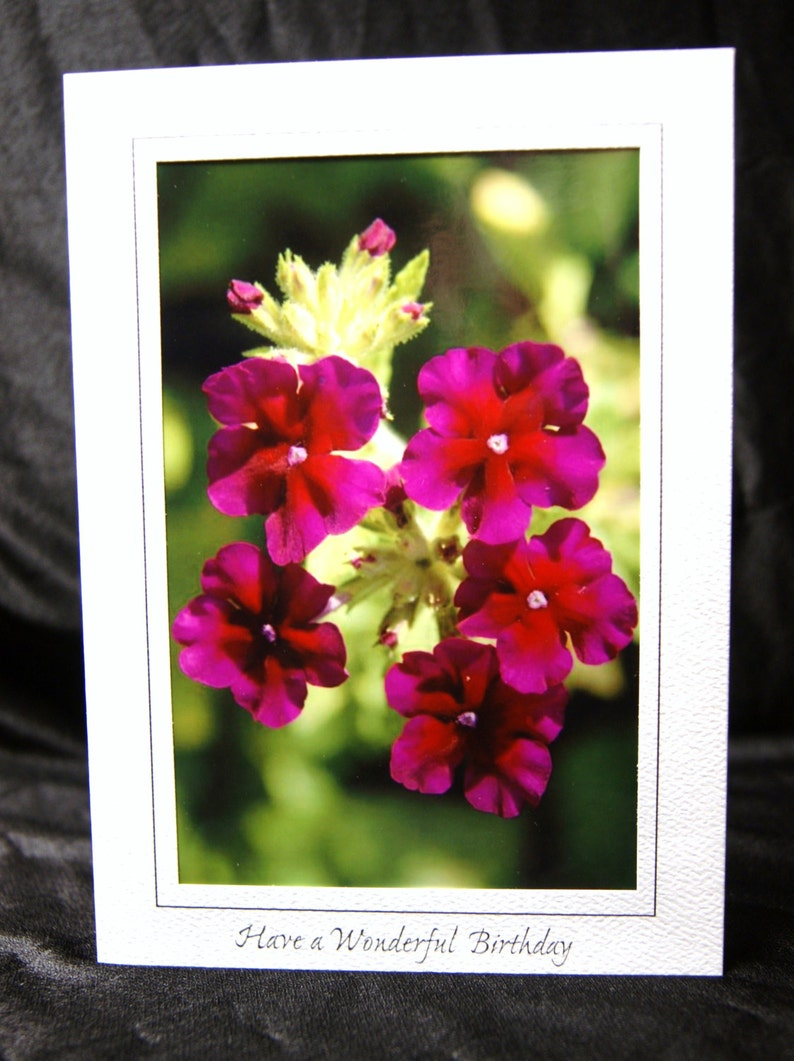 Nature Inspired Single Photo Greeting Card or Print--Red /& Pink Flower Blooms--Vivid Verbena--#2