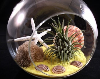 Sunshine Delight - Air Plant or Tillandsia Globe