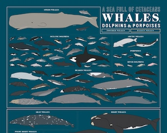 A Sea Full of Cetaceans: Whales, Dolphins, and Porpoises