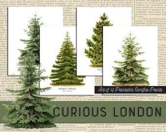 Printable Vintage Style Christmas Pine Tree Instant Download Conifer Art Prints on White from Curious London