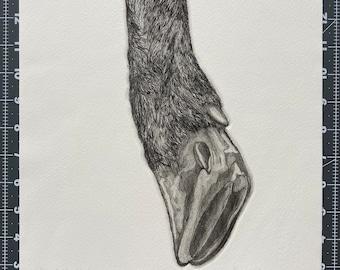 Elk Hoof - Animal Etching - Intaglio Etching - Hand-Pulled Print