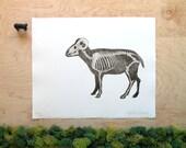 Ram Skeleton - Big Horned Sheep Print - Big Horn Ram Anatomy - Animal Skeleton Etching - Skull - Intaglio Etching - Hand-Pulled Print 11x14