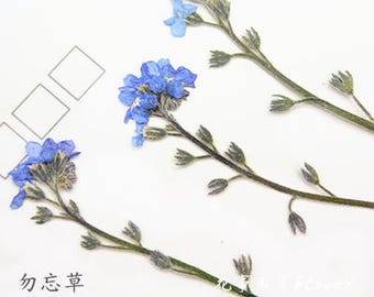 Forget Me Not Flower Etsy