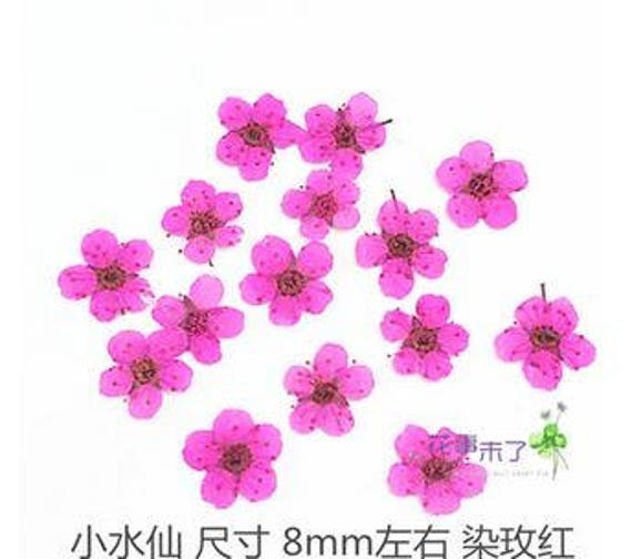20 pcs pressed rose pink narcissus pressed dry flowers etsy image 0 mightylinksfo