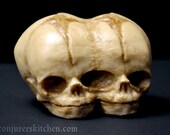 Chocolate conjoined fetal skull