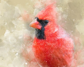 Cardinal Photo Print, Fine Art Photography, Nature photo, Photo paper poster