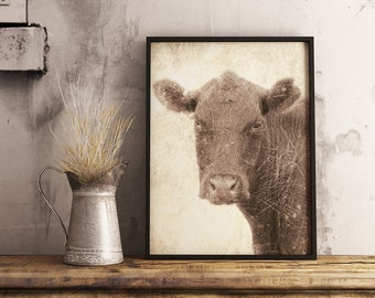 Rustic Cow Photography Print, Farmhouse Style Wall Art, Brown Cow Rural Home Decor, Cattle Photo Print, Farm Animal, Photography Gift