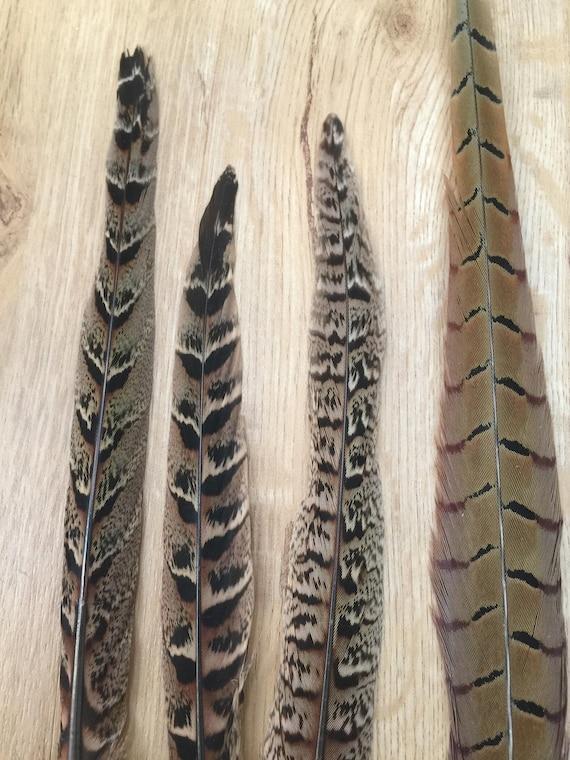 Lot de plumes de faisan faisan faisan faisan européen 27 - queue, ailes, plumes du corps 746c70