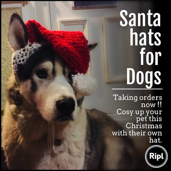 Christmas Hats For Dogs.Santa Hats For Dogs