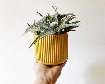 Fluted Riley Planter Pot   Golden Yellow   Medium Size   Ridged Planter   Eco Friendly Home Decor   Modern Planter