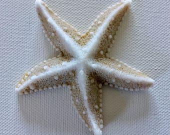 Starfish Soaps