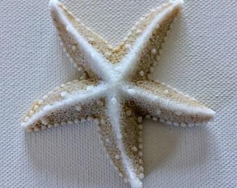 Realistic Starfish Soap -  Beach, Soap, Nautical, Beach Wedding, Wedding Favors, Beach Theme, Guest Soap, Starfish, Custom Orders