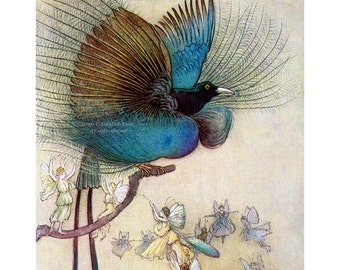 Bird of Paradise and Fairies Print - Water Babies Illustration - Warwick Goble