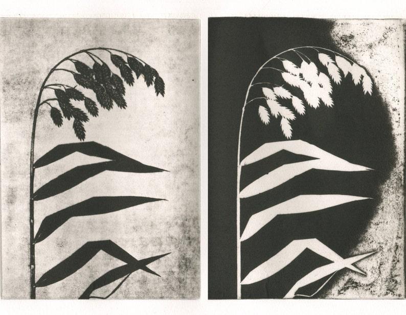 modern etching original print minimal Weeping Grass