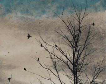 Art Print Etching, February Visit, Doves Strand