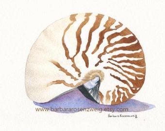 Nautilus Art Print, Seashell Painting, Seashell Wall Art, Beach Decor, Watercolor Beach Art, Shell Watercolor, Beach Wall Art, Nautilus Gift