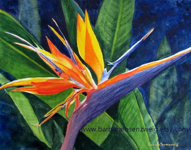Bird of Paradise Flower Watercolor Painting Art Print image 0