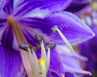 Hosta Flower Photo Print