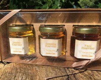 Honey Sampler - 3 varieties of pure raw honey- Spring, Summer, and Fall