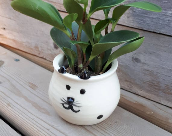 Pottery handmade kitty cat whimsy face  planter catch all  boho perfect for airplants or succulents great  gift