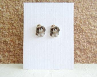 Little Studs-Shih Tzus-Puppy Love