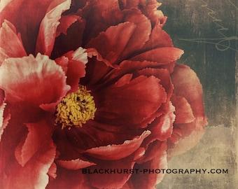 Red Peony Fine Art Print