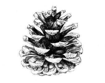 Pine Cone Print, Pine Cone Decor, Nature Art, Black And White, Minimalist Art, Fine Art Print, Botanical Illustration, Drawing, Sketch Art