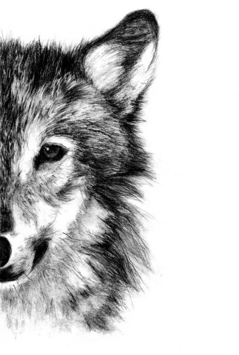Wolf fine art print illustration print art print pencil drawing pencil sketch wall print home decor wolf print wolf drawing drawings