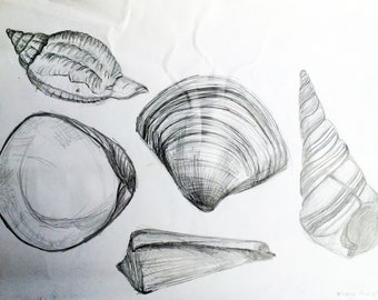 Seashells 4 original by Margo Humphries
