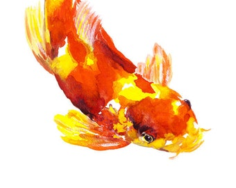 Orange & Yellow Koi Fish watercolor print signed by artist Stephanie Kriza