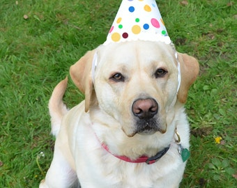 Dog Birthday Card YELLOW LABRADOR PUPPY With Happy Wishes Greeting Portrait Art