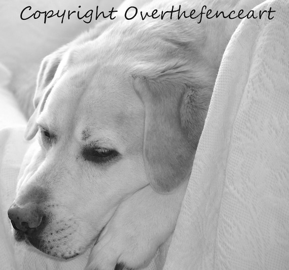Many Images To Choose From DOG GREETINGS CARD Hand Made Labrador Retriever